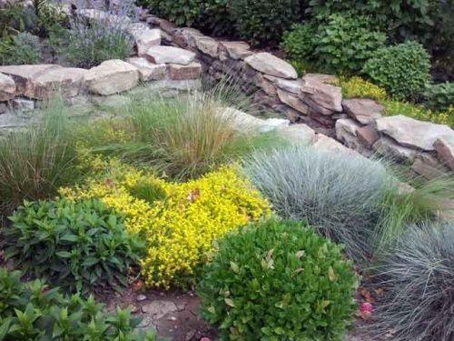 10 Ідеальних рослин для оформлення саду