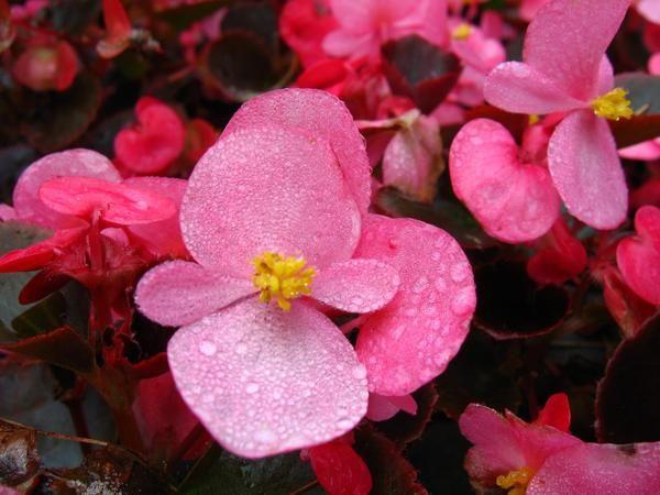 10 Рослин, квітучих в липні