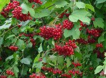 10 Самих популярних рослин від кашлю