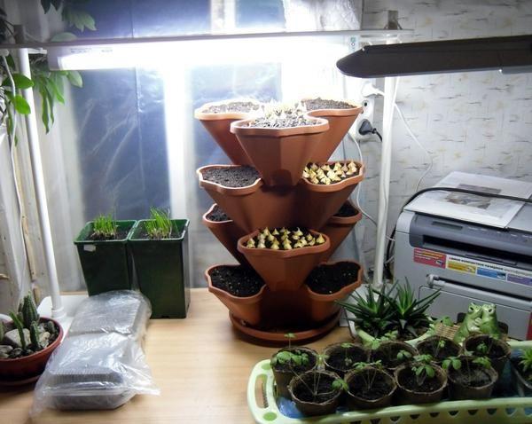 Досвечіваніе рослин в домашньому городі