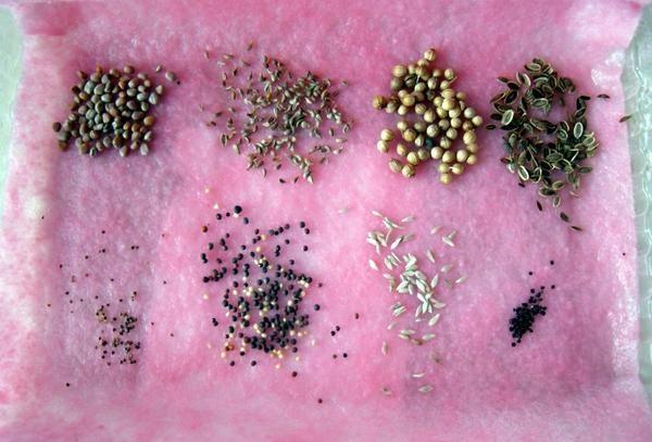 Передпосівна підготовка насіння