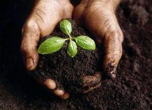 12 основних компонентів для вирощування кімнатних рослин