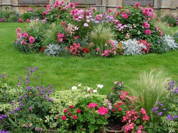 12 Правил розміщення рослин в квітниках
