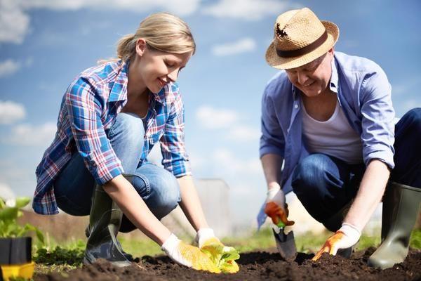 15 Найбільш часті помилок при посадці рослин