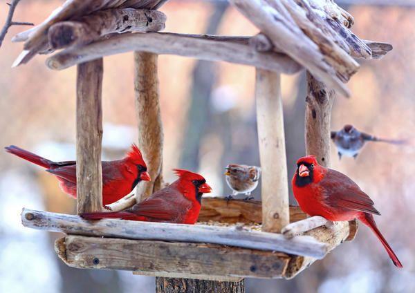 20 Відмінних ідей пташиних годівниць