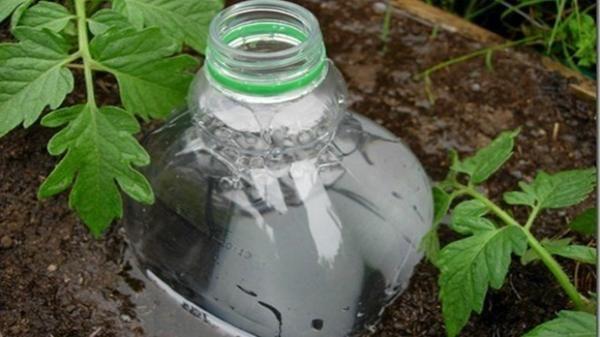 глибокий полив за допомогою пластикових пляшок, фото з просторів інтернету