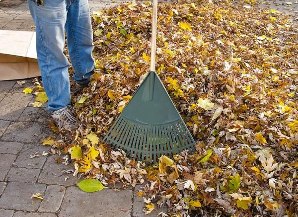 Сухе листя