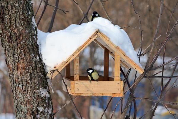 8 Ідей нескладних пташиних годівниць