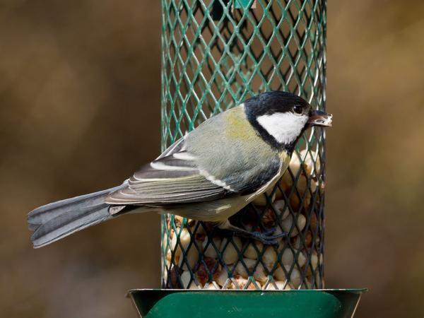 Годівниця для птахів з металевої сітки