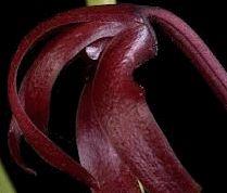 Мистецтво квілінгу: техніка квіллінг вироби своїми руками