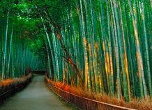 Бамбуковий коридор