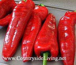 Вітамін С в продуктах. Червоний солодкий перець - відмінне джерело вітаміну С. Перець