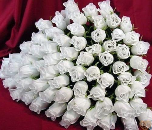 Білі троянди на фото як втілення невинності, добра і світла
