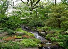 Ботанічний сад нью-йорка весняна прогулянка