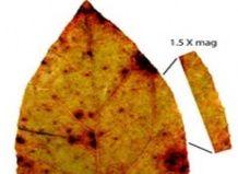 Ботаніки з`ясували, навіщо листю зуби