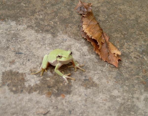 Царівна-жаба - наша подружка