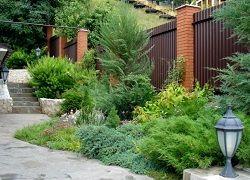 ландшафтний дизайн з хвойними рослинами