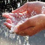 Чим поливати кімнатні рослини