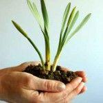 Що робити відразу після покупки рослини