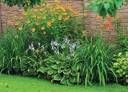 Що посадити уздовж забору: підбір багаторічних рослин