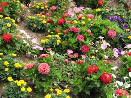 Килимові і текстурні квітники і клумби з одно- дворічних квітів