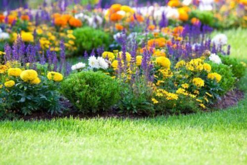 Квітники безперервного цвітіння: яскраві фарби все чотири сезони