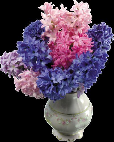 Квітка гіацинт носить ім`я давньогрецького персонажа
