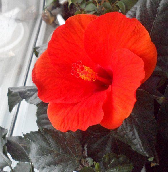 Квітуча радість для дуже спекотною квартири