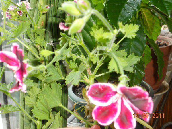 Квітучі і плодоносні