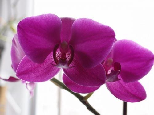 Квіти що діти догляд люблять, кімнатні рослини