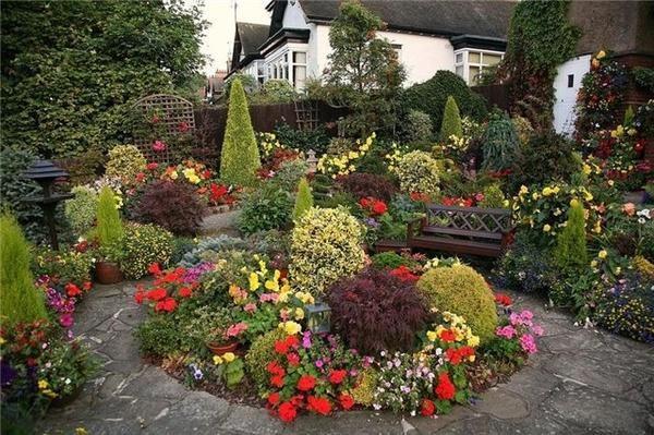 Квіти для клумби