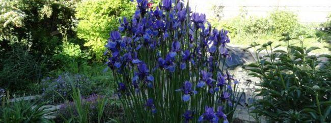 Квіти для тінистих ділянок
