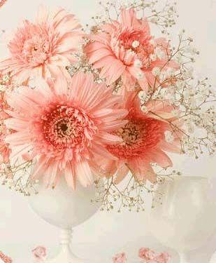 Квіти: гербера - африканська стійкість і витонченість