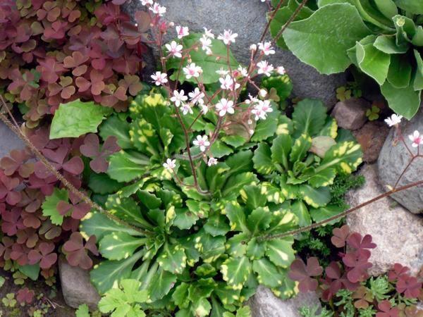 Квіти і камені