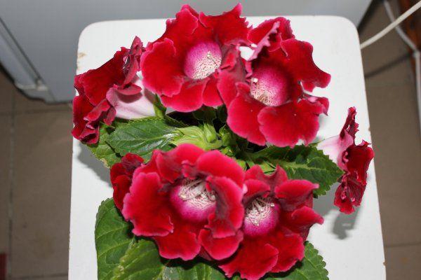 Квіти з насіння цвітуть