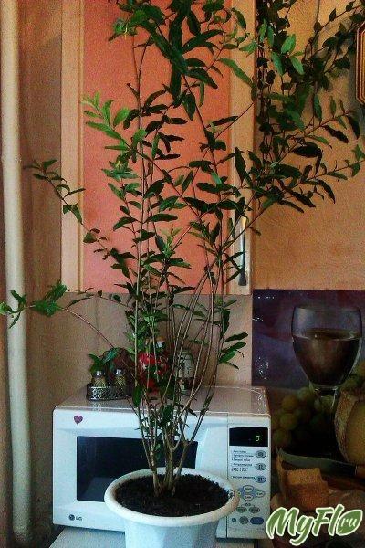 Квіти з насіння різні
