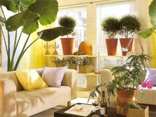 Квіти кімнатні як прикраса інтер`єру