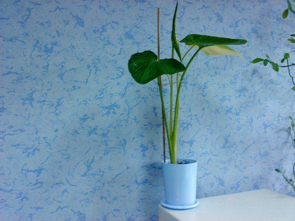 Квіти кімнатні на роботі