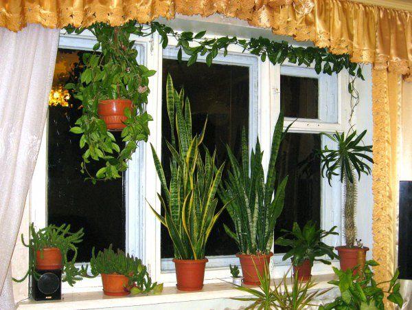 Квіти на моєму південно-західному вікні