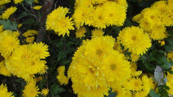 Квіти проженуть осінню нудьгу