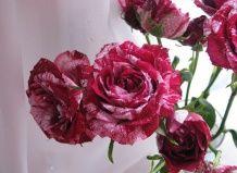 Квіти з незвичайною забарвленням викликають питання