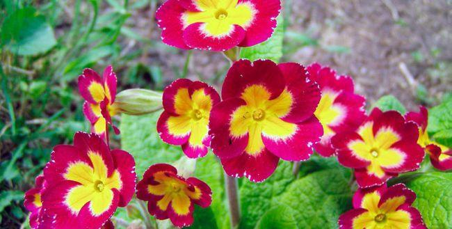 Квіти в саду які люблять тінь