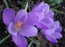 Квіти змушують усміхнутися навіть якщо дуже сумно