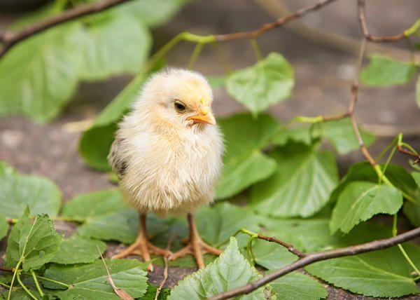 Курчатам потрібне свіже повітря!
