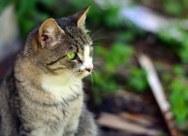 Дачний журнал кішки кет сватання гусара