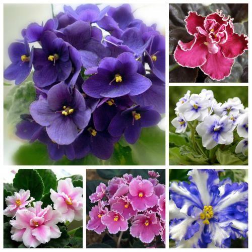 Необхідна доза поливу кімнатних квітів