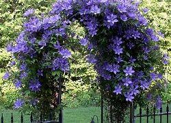 Декорування саду: опора для клематиса