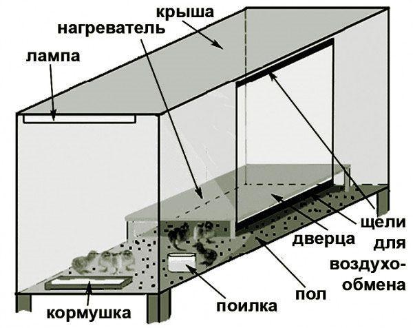Схематичне зображення брудера