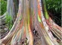 Дерево-веселка