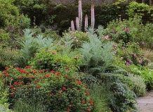 Дикий сад вільяма робінсона